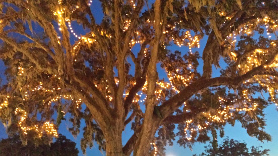 oak tree with Christmas lights