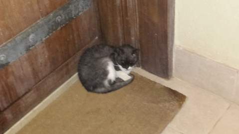 I found this kitty sleeping by my door each night.