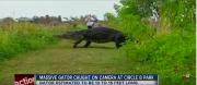giant-florida-gator