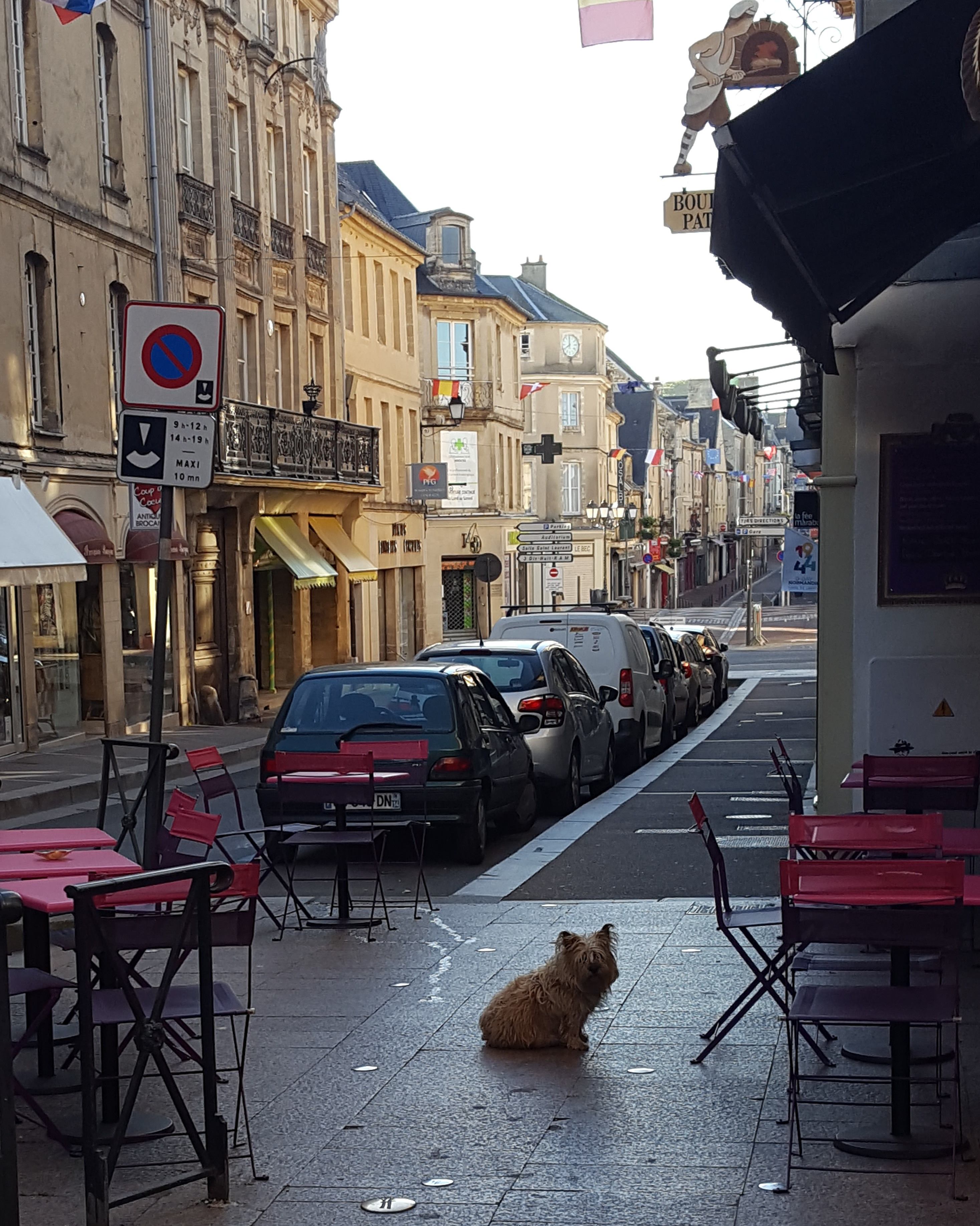 dog outside cafe in Bayeux France Normandy