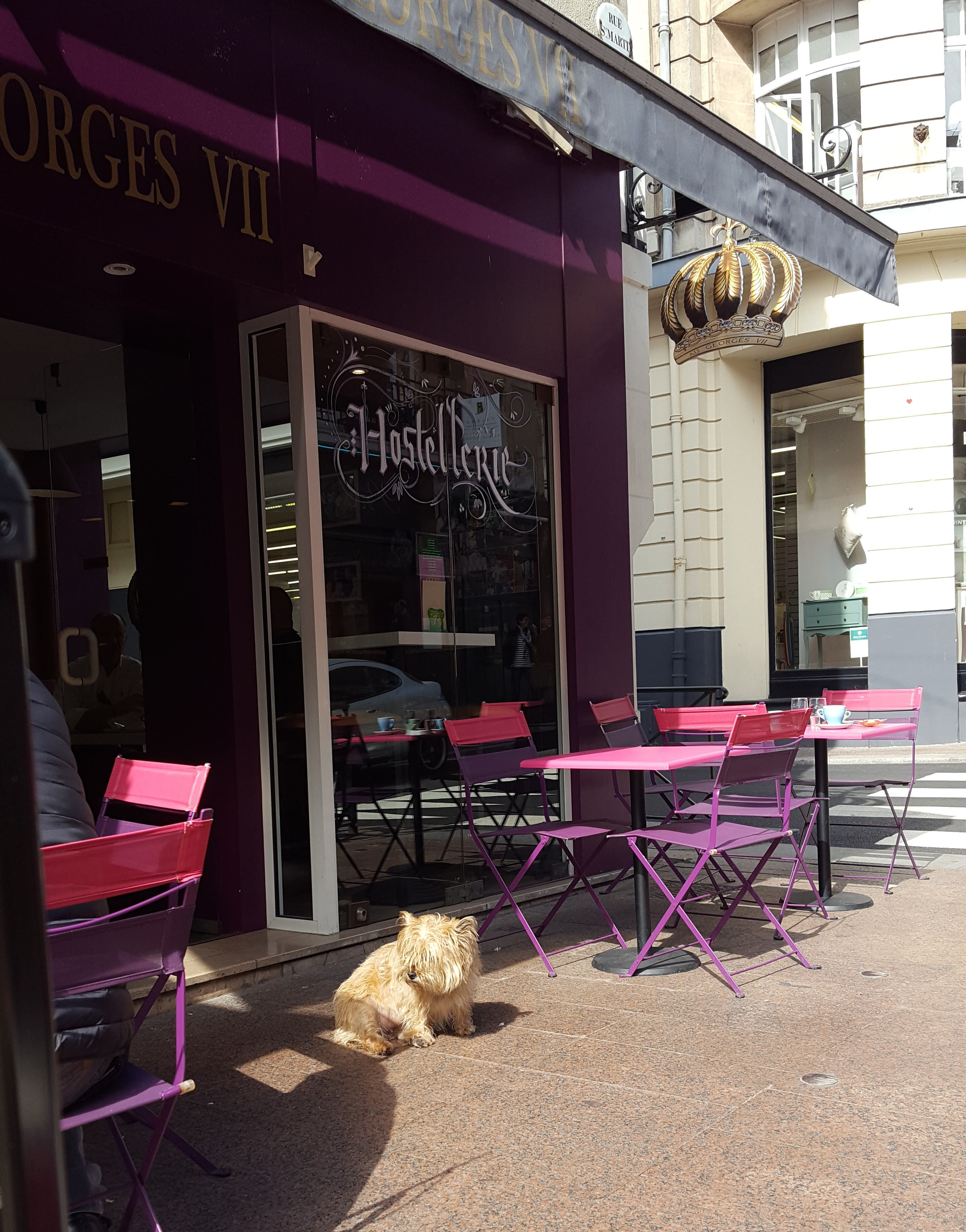 dog outside a French cafe in Bayeux