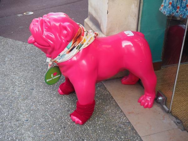 Bayeux dog